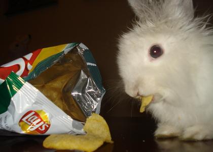 Все любят чипсы!